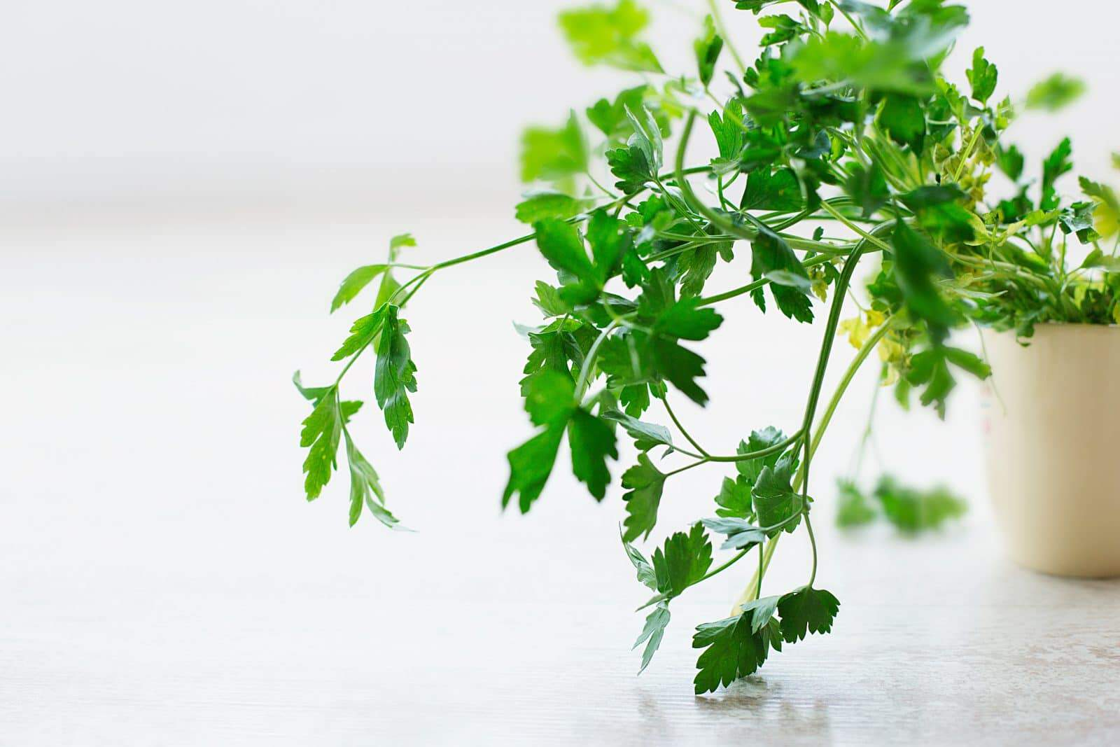 parsley grown on a small pot