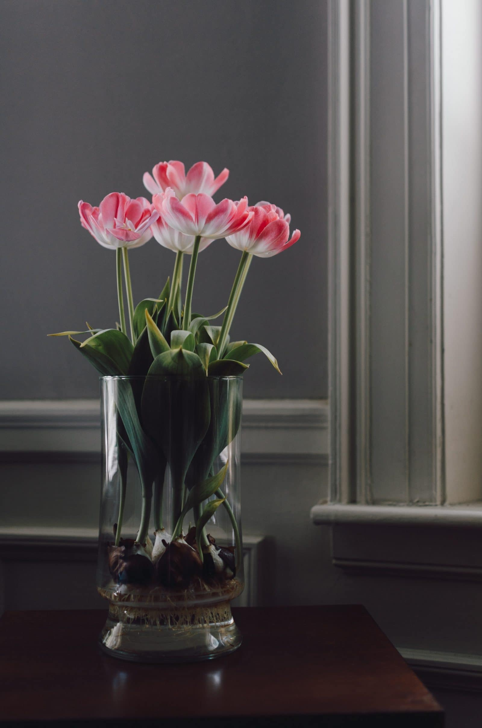 beautiful indoor flower growing on vase