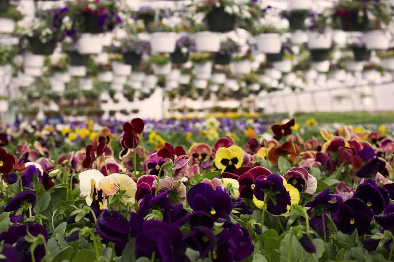 colorful spring garden using hydroponic system