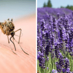 6 Plants Mosquitoes Simply Hate – And You Can Easily Grow Them In Your Yard