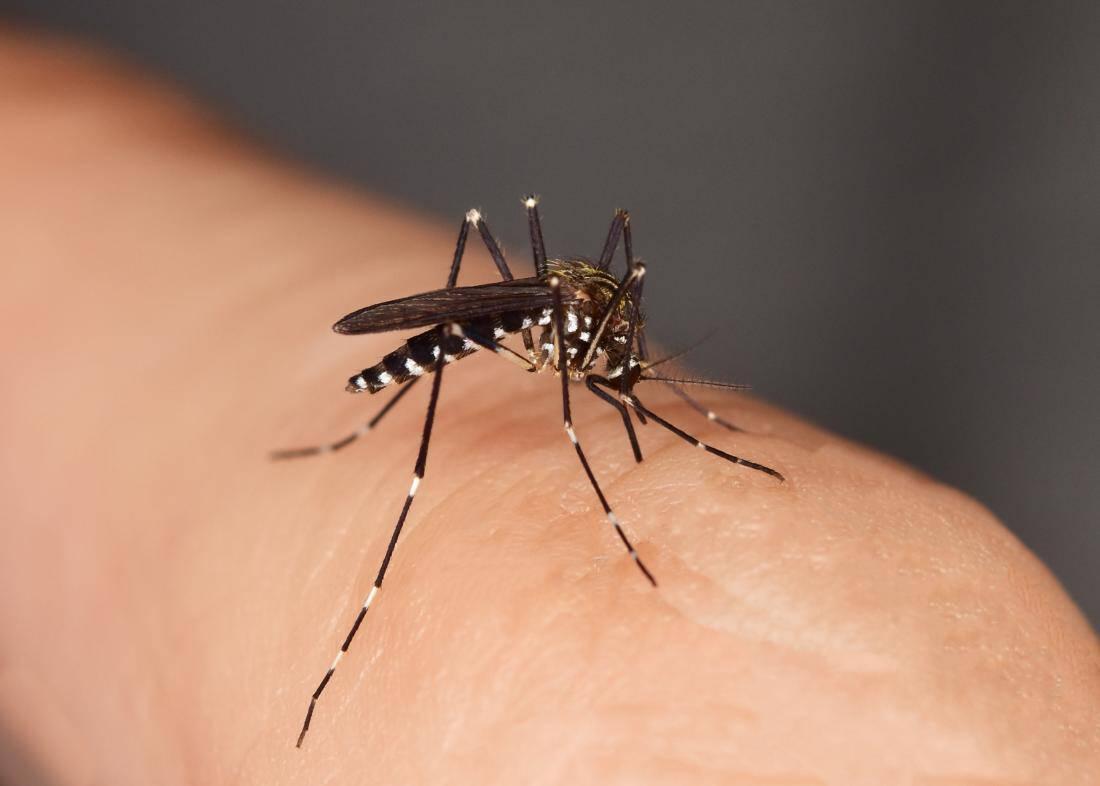 Комары картинки и видео, днем