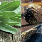 The Power of Smudging: How Burning Sage Kills Bacteria In The Air and So Much More