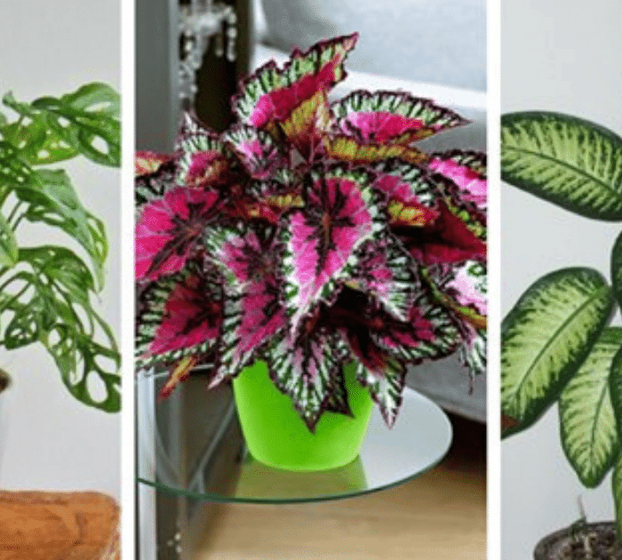 Five Super-Strong Houseplants That Thrive In Low Light