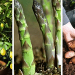 5 Delicious Fruits and Vegetables You Can Plant Once And They Will Keep Coming Back Every Year