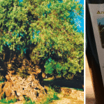 Magnificent 3,000-Year-Old Olive Tree Still Produces Delicious Olives To This Day