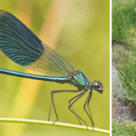 A Single Dragonfly Can Eat Hundreds of Mosquitoes Per Day, Plant This to Attract Them to Your Yard