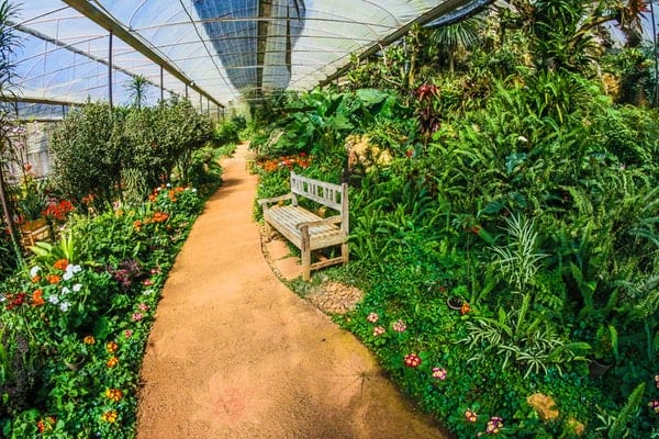 huge greenhouse
