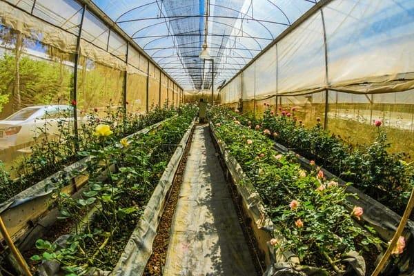 greenhouse full of plants