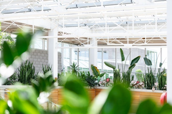 greenhouse with contemporary flora