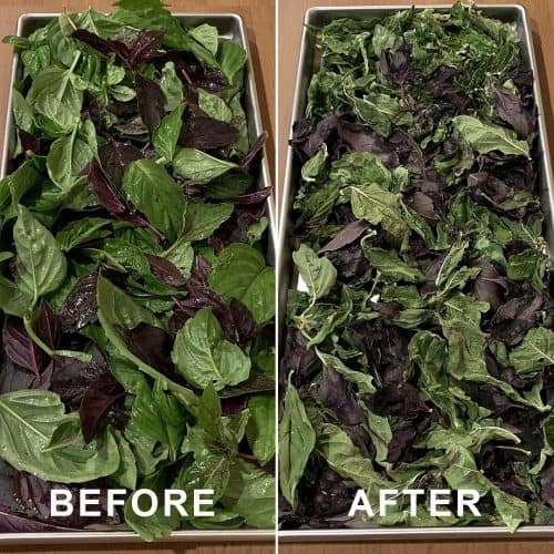 Freeze dried basil (before and after pictures)