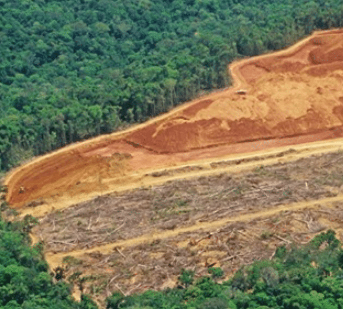 Amazon Deforestation Has Increased To Rate Of 3 Football Fields Per Minute