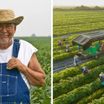 New Bill Would Enable Farmers to Sue Monsanto When GMO Crops Invade Their Property