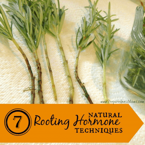 7 natural rooting hormone techniques