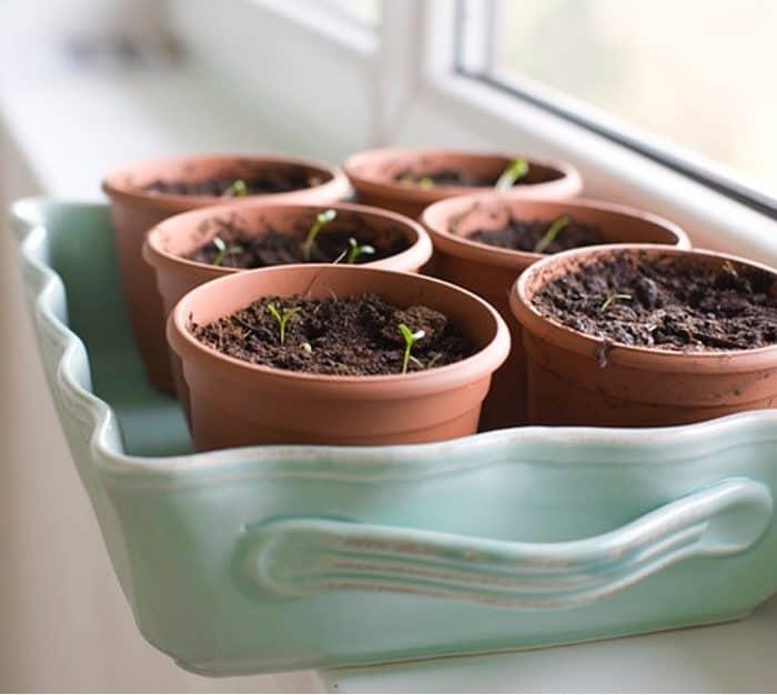 6 Benefits Of Growing A Sustainable Indoor Vegetable Garden